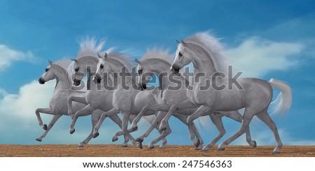 Arabian Horse Herd - A herd of beautiful white Arabian horses in a wild desert environment. - stock photo