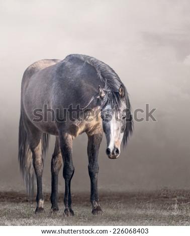 Arabian horse in mist in cloudy weather  - stock photo