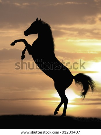 arabian horse stallion - stock photo