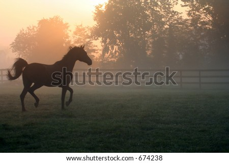 Arabian Horse Trotting in Morning Fog - stock photo