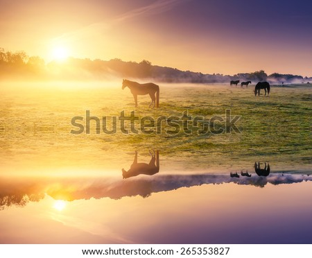 Arabian horses grazing on pasture. Carpathians, Ukraine, Europe. Beauty world. Retro and vintage style, soft filter. Instagram toning effect. Flip canvas vertical. Double exposure effect. - stock photo
