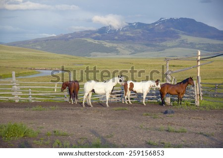 Arabian horses running in corral at Peggy Delaney's ranch in Centennial Valley, near Lakeview, MT - stock photo