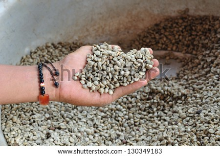 Arabica green beans in hand. - stock photo