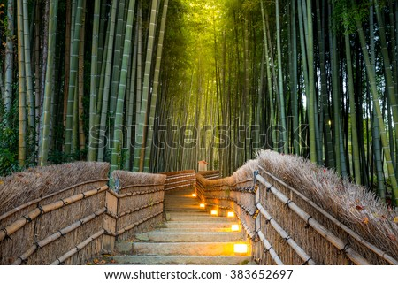 Arashiyama Bamboo Forest in  Kyoto Japan - stock photo