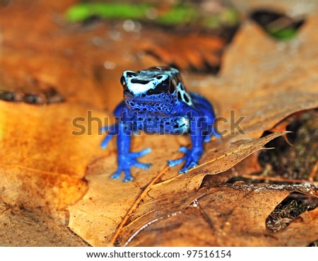 Arboreal frog - stock photo
