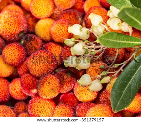 Arbutus flowers and leaves. Close-up. - stock photo