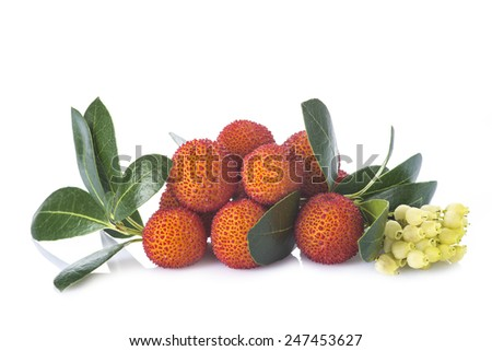 Arbutus unedo fruits with flowers and leaves isolated on a white background - stock photo