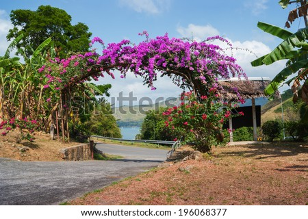 Arch of purple flowers in the garden at the entrance - stock photo