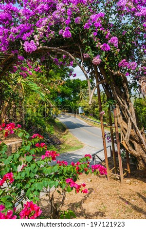 Arch of purple flowers in the garden in Thailand - stock photo
