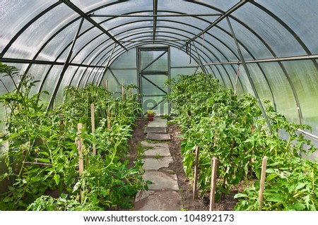 arched greenhouse with tomato seedlings - stock photo