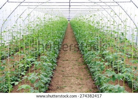 arched greenhouse with young plants - stock photo