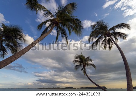 arcing palm trees - stock photo