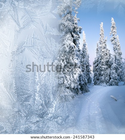 Arctic forest in winter  - stock photo