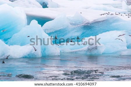 Arctic tern (Sterna paradisaea) fishing, amongst the icebergs in Jokulsarlon, Glacial outflow lake in southern Iceland - stock photo