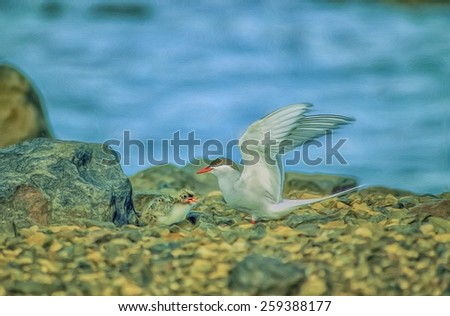Arctic tern with her chick - stock photo