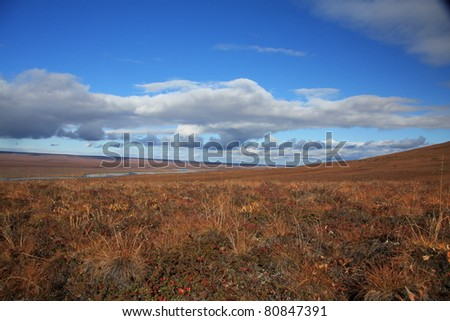 Arctic Tundra - stock photo