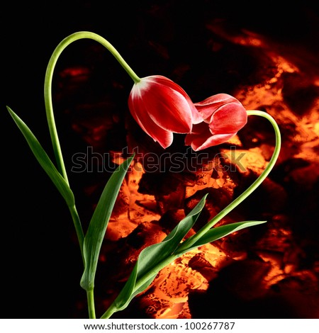 Ardent passion. Idea with flowers forming heart on darkness background with live coals - stock photo