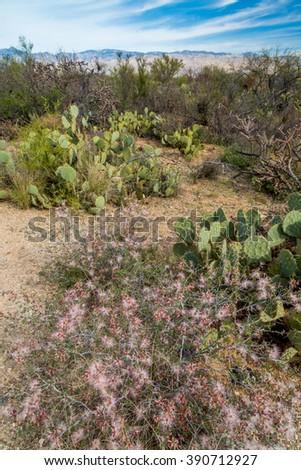 Arizona spring landscapes - stock photo