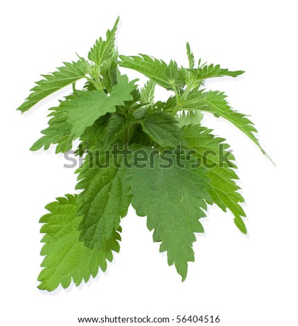 Armful of a green nettle on  white a background - stock photo