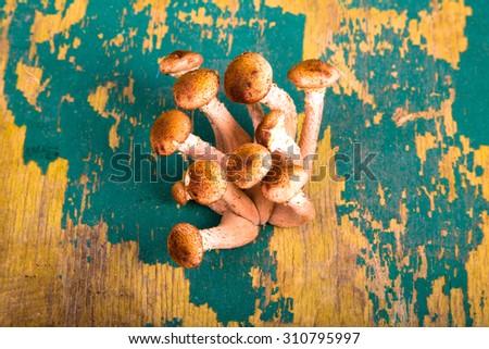 Armillaria (Kuehneromyces mutabilis), group of mushrooms on the old cracked table. - stock photo