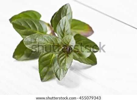 Aromatic Herb - stock photo