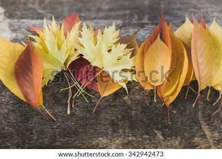 Arranged colorful leaves lying on tree. From above - stock photo
