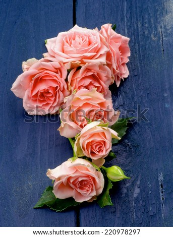 Arrangement of Beauty  Pink Roses with Leafs and Bud In a Row on Dark Blue Wooden background  - stock photo