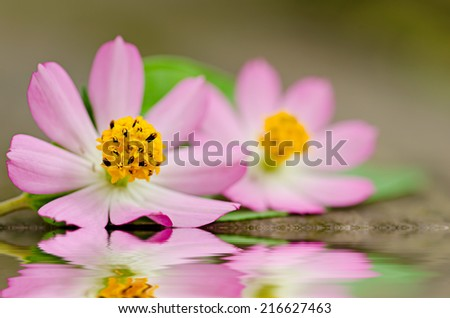 Arrangement of daisy flower and green leaf - stock photo
