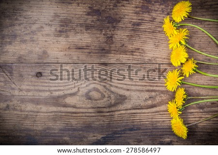 Arrangement of dandelions on brown wood texture with empty space for text - stock photo