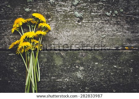 Arrangement of dandelions on grey wood texture with empty space for text - stock photo