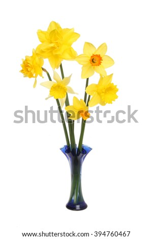 Arrangement of different Daffodil flowers in a glass vase isolated against white - stock photo