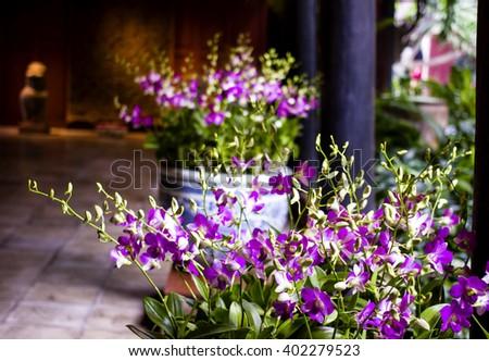 Arrangement of fresh purple flowers at Jim Thompson House in Bangkok, Thailand. - stock photo