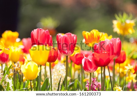 Arrangement of multi colored flowers - stock photo