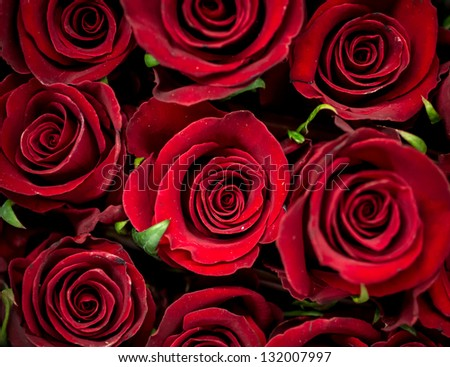 Arrangement of rows of red roses - stock photo
