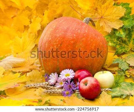 Arrangement of thanksgiving. Pumpkin, apples, chrysanthemums, wild asters and spikes on leafs background - stock photo