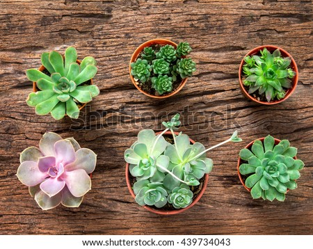arrangement of the succulents or cactus on wooden background, overhead or top view - stock photo