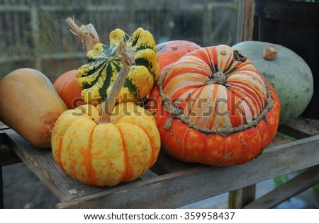 Arrangement of Winter Squash and Gourds on a Wooden Shelf in a Greenhouse in a Vegetable Garden in Devon, England, UK - stock photo
