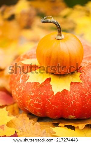 Arrangement with pumpkins - stock photo