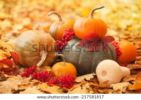 Arrangement with pumpkins and autumn leaves - stock photo