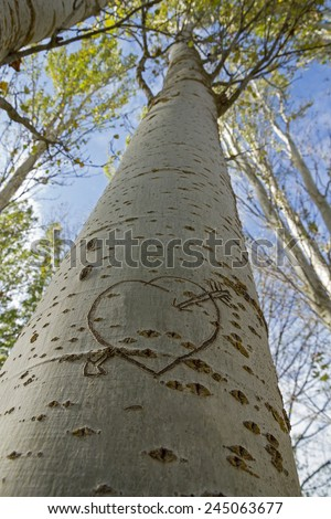 Arrow and Heart prints in the bark of a tree  - stock photo