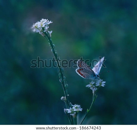 Art and butterfly...II - stock photo