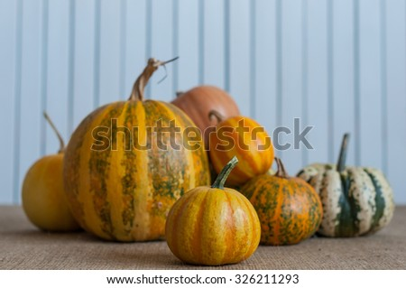 Art autumn Pumpkin thanksgiving background. Harvest - set of different pumpkins. - stock photo