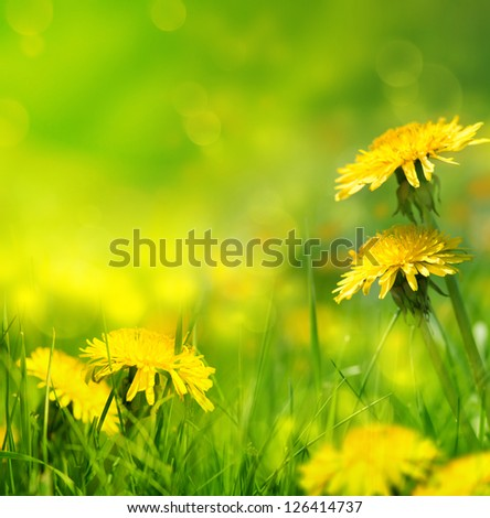 art Beautiful spring flowers background - stock photo