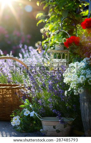 art blooming flowers near the house in Provence - stock photo