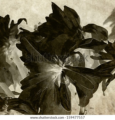 art floral vintage black and white background with asters - stock photo