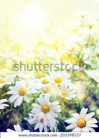 Art high light; Bright summer flowers Natural background, retro filter - stock photo
