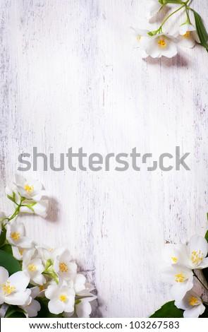 art jasmine spring flowers frame on white background - stock photo