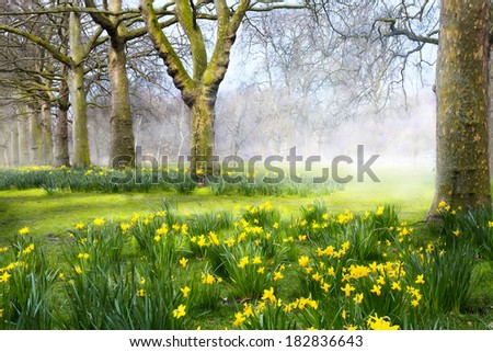 Art spring flowers in the  English park - stock photo