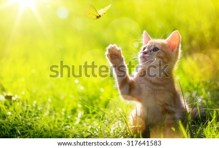 art Young cat / kitten hunting a butterfly with Back Lit  - stock photo