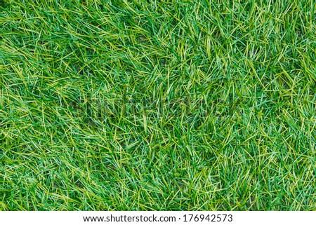 Artificial Grass Field Top View Texture - stock photo